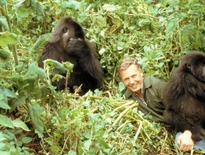 'Wonders Will Never Cease' | Ninety Years of David Attenborough